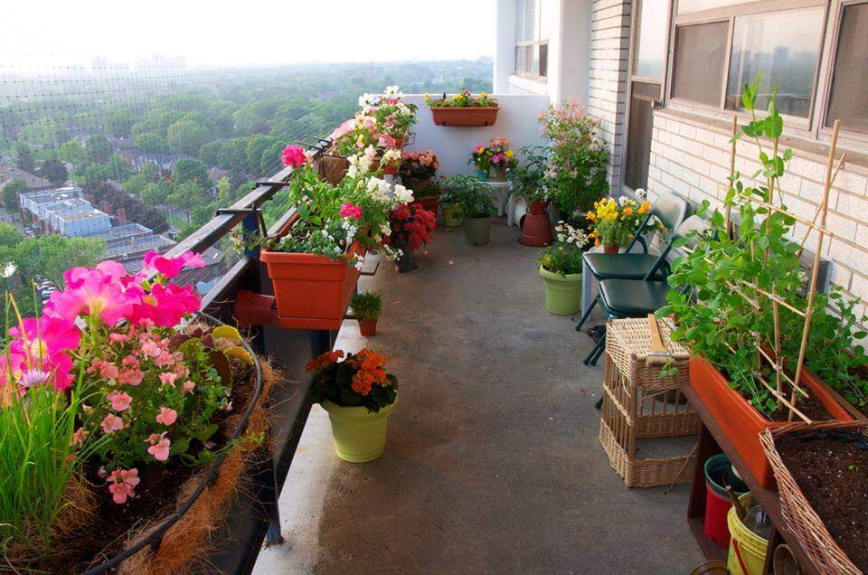Use Flowers for Scent in Balcony