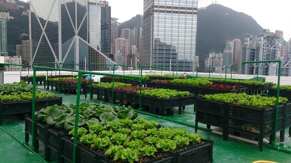 Organic Fresh Veggies and Fruits